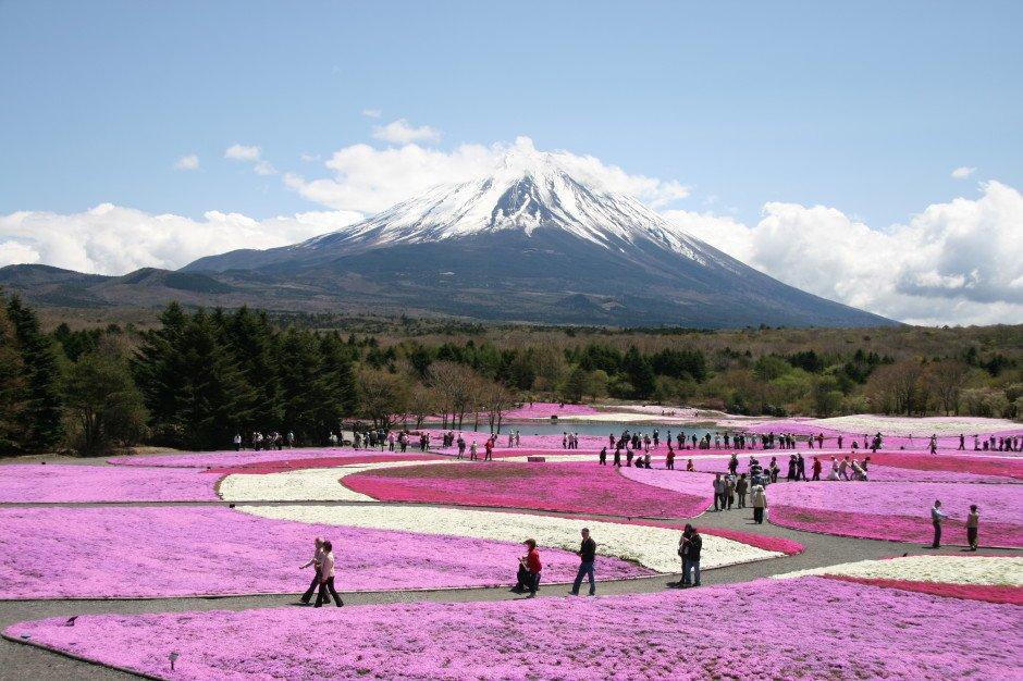 Fuji-Shibazakura-Festival-940x626